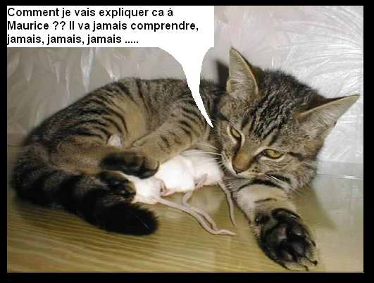 Quelques photos de chats dr les vid os chats dr les humour chat insolite chat - Dessins de chats rigolos ...