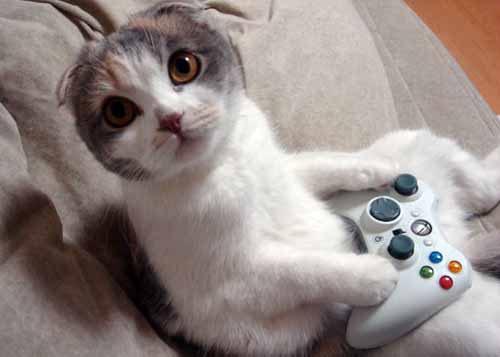 Photo d un chat qui joue la xbox 360 lol vid os chats - Videos droles d animaux ...