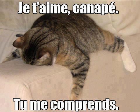 Häufig Image drôle de chat avec texte | Vidéos chats drôles, humour chat  PT03